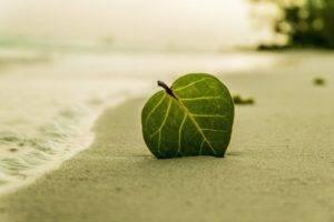 beach 394503 1280