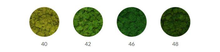 choix couleur mur vegetal