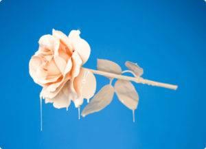 d03 Img Blue Rose