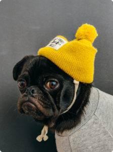 d03 Ing Dog Hat