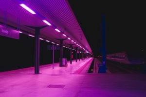 purpleway